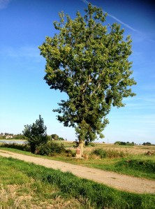 Crash tree