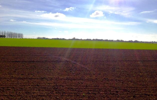 The killing fields of Agincourt (Photo: B Spender)